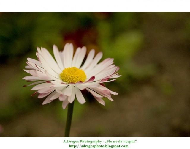 Floare de inceput