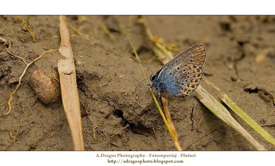 Fotoreportaj : Fluturii