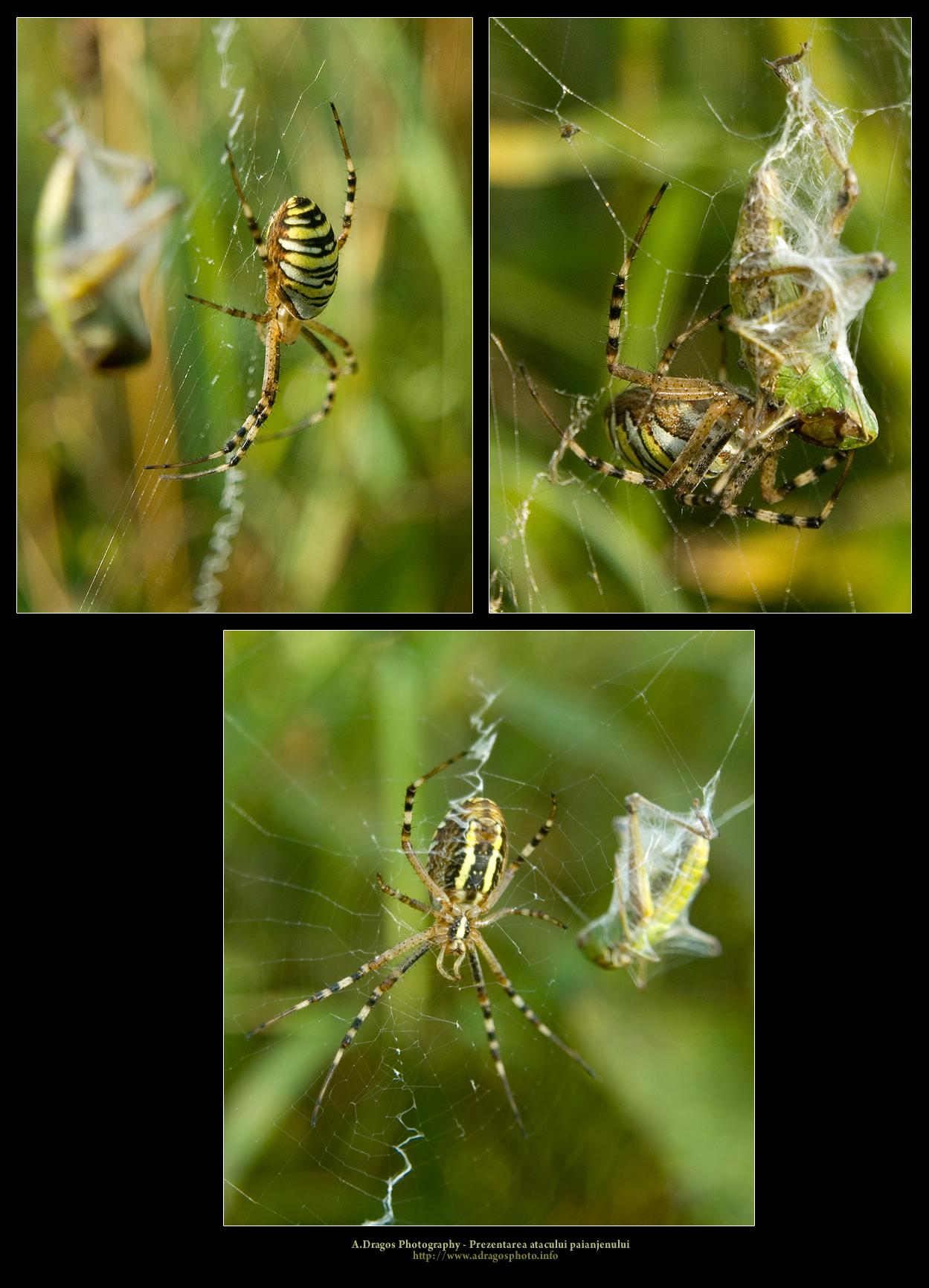prezentarea-atacului-paianjenului-2