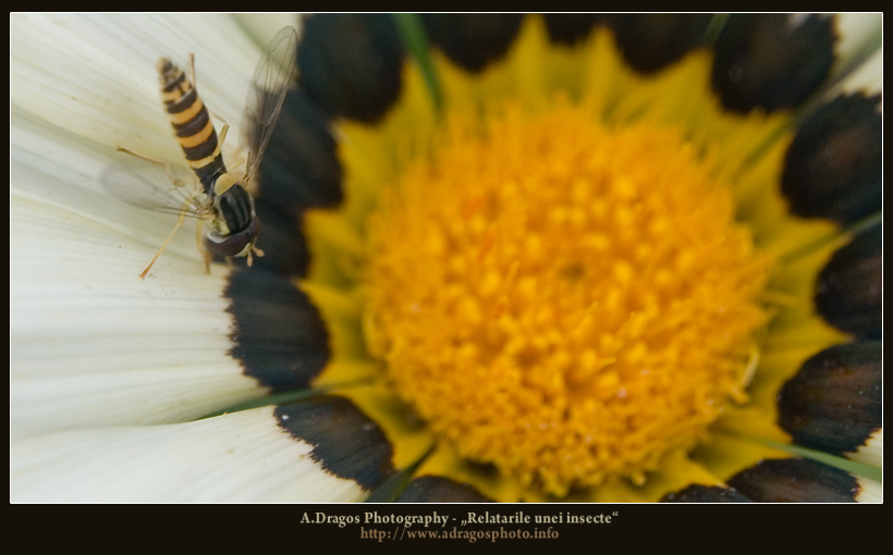 relatarile-unei-insecte-1