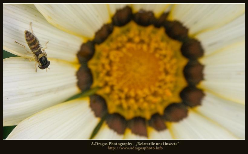 relatarile-unei-insecte-2