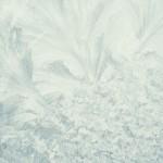 Flori de gheaţă 2 - Nikon D7000, 1/2000s, f/1.8, iso 125, 50 1.8