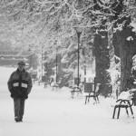 Te uită cum ninge decembre 1 - Nikon D7000, 1/1600, f/5.6, iso 200, 55-200 VR