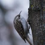 Păsări de iarnă 1 - Nikon D7000 + 55-200 VR @ 200mm, 1/320s, f/5.6, ISO 1000