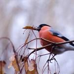 Păsări de iarnă 2 - Nikon D7000 + 55-200 VR @ 200mm, 1/250s, f/5.6, ISO 1600