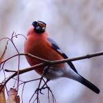 Păsări de iarnă 3 - Nikon D7000 + 55-200 VR @ 200mm, 1/250s, f/5.6, ISO 1600