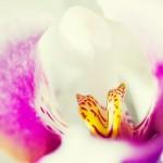 Un cuvânt frumos şi-o floare 1 - Nikon D7000 + 50 1.8 inversat + SB-600 - 1/160, f/4, ISO 640