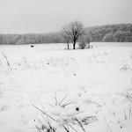 Peisaj de iarnă 3 - Nikon D7000 + 18-55, 1/1600, f/3.5, ISO 100