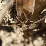 Fotografii macro de primăvară 1 - Nikon D7000 + 18-55 întors - 1/500s, f/11, ISO 1250