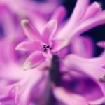 Semne ale primăverii 2 - Nikon D7000 + 50 1.8 - 1/400s, f/3.5, ISO 100