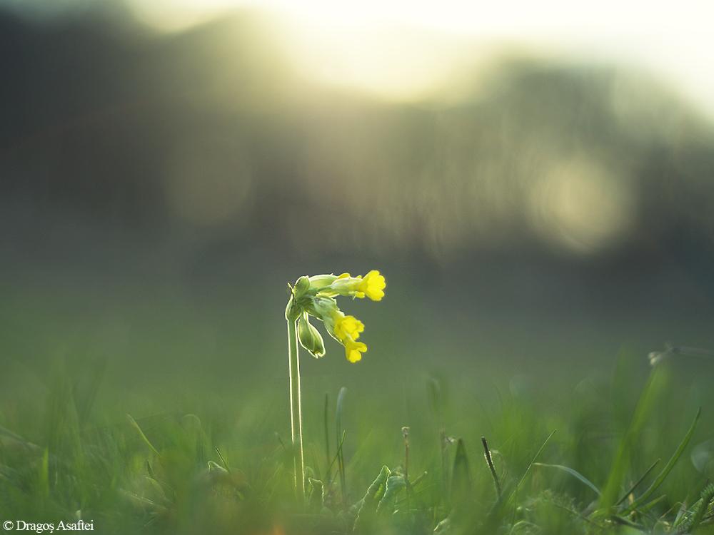 Amprentă a primăverii 3 - Nikon D7000 + 50 1.8 - 1/2000s, f/1.8, ISO 100
