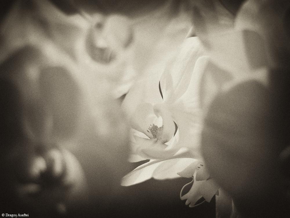 Floare și genune 3 - Nikon D7000 + 50 1.8 - 1/160s, f/2.2, ISO 1000