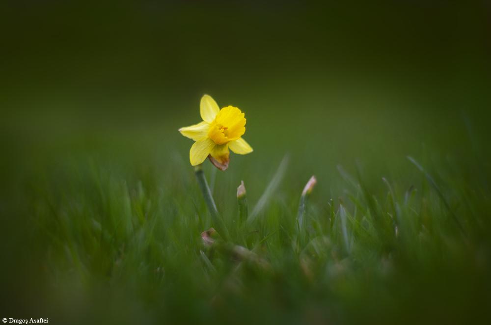 Simplu, semn al primăverii 2