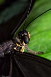 Fluture din perspectivă macro