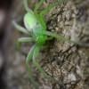 Păianjen 2 - Nikon D7000 + 85 Macro - 1/200s, f/10, ISO 2000