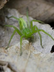 Păianjen 7 - Nikon D7000 + 85 Macro - 1/400s, f/14, ISO 2000