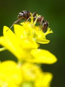 Povestea unor furnici II