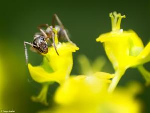 Povestea unor furnici III