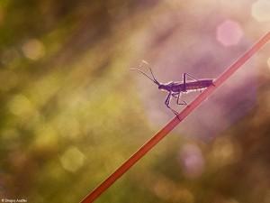 Natura, dimineața, ora 6