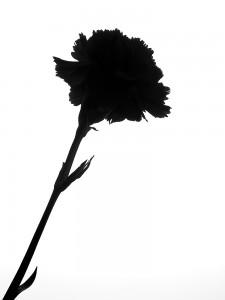 Silueta unor flori