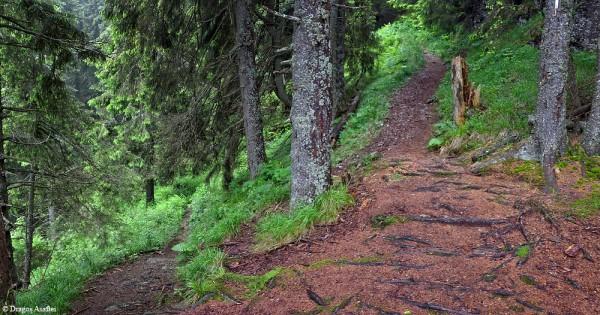 Roadtrip to Ceahlău - Cabana Dochia - Poiana Maicilor
