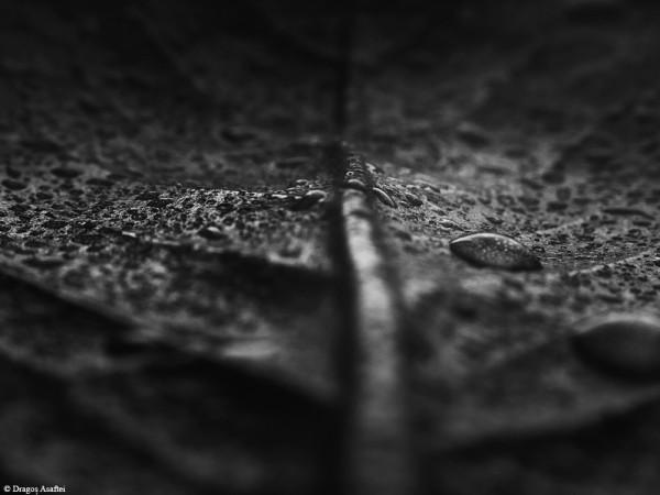Pespective ale fotografiei abstracte