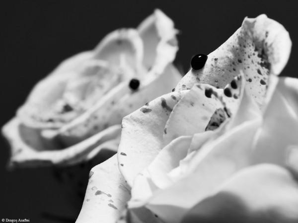 Poveste în alb-negru
