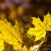 Culorile toamnei cu Nikon 24-70 2.8