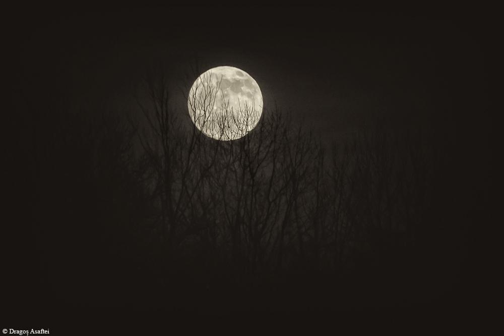 Răsărit al lunii