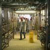vizita-fabrica-danone-41