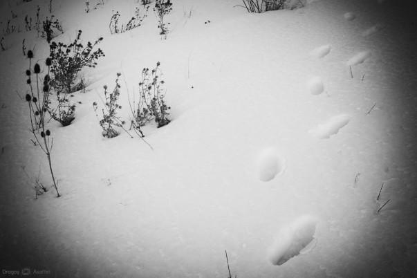 Urme în iarnă