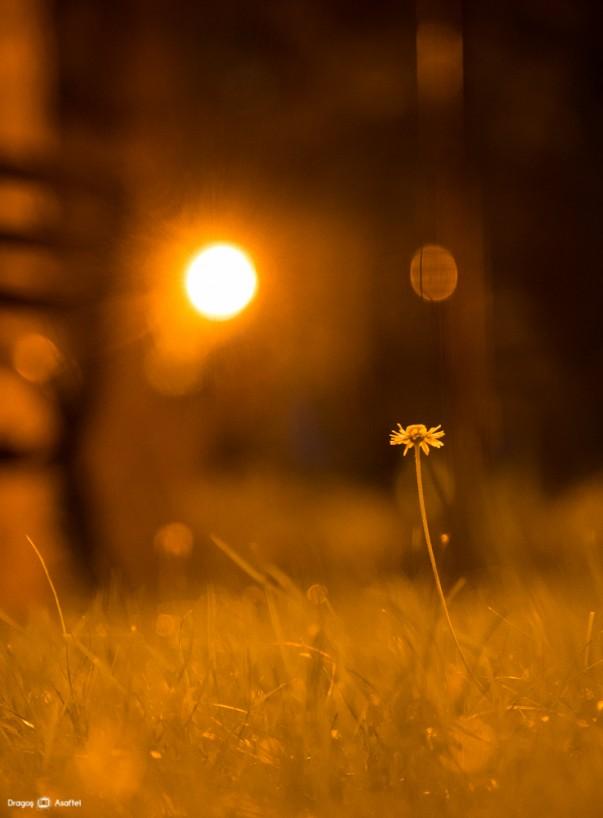 Fotografii de noapte - Nikon D4 + 24-120 - 1/10s, f/4, ISO 4000