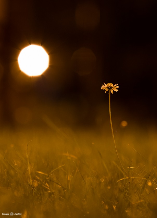 Fotografii de noapte - Nikon D4 + 85 - 1/20s, f/2.2, ISO 1600