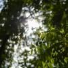 Fotografii cu Nikon D4 - 1/8000s, f/1.8, ISO 100