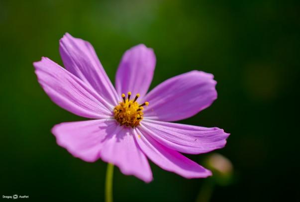 Frumusetea unei flori