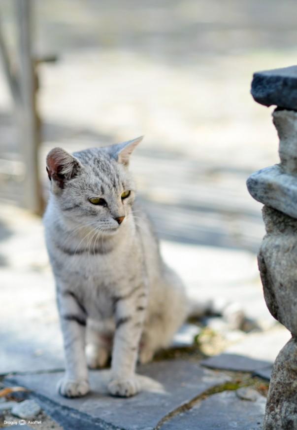 #PrinSibiulMeu - Pisicuța care ne-a distras atenția