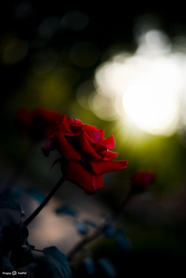 Și florile ne pot zâmbi