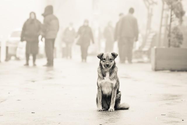 Pe străzile învăluite de ceață