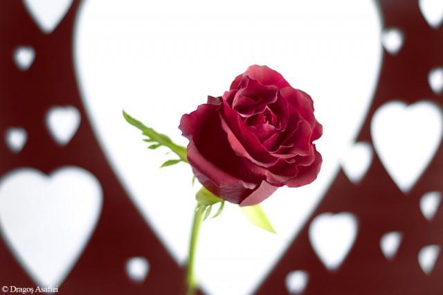Nu ai nevoie de un pretext ca să dăruiești o floare!