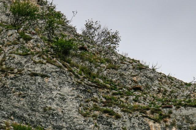 Capre Negre - Cheile Zăneștiului - Piatra-Craiului