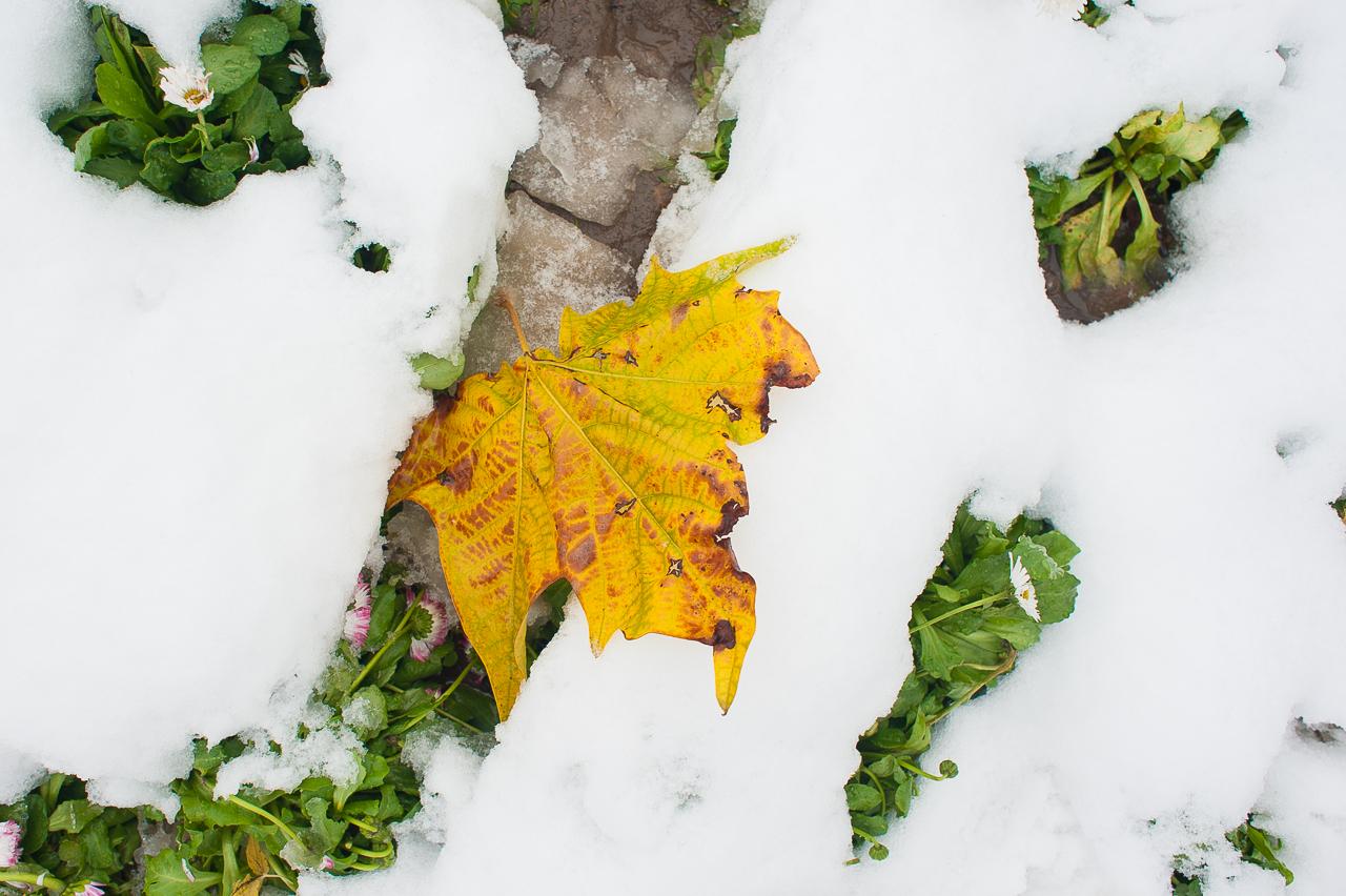 Iarna și primele marcări ale teritoriului