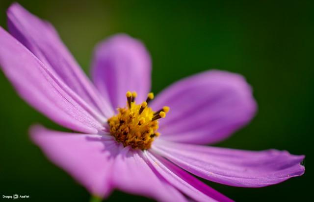 frumusetea-unei-flori-05