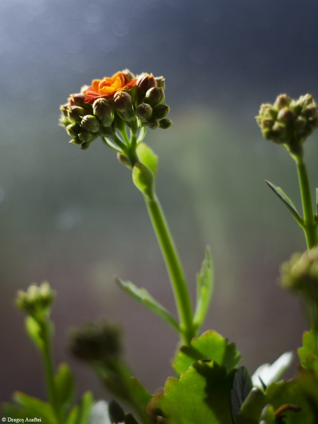 suprematie-florala-4