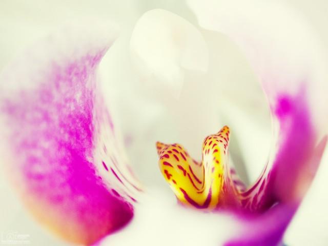 un-cuvant-frumos-si-o-floare-1