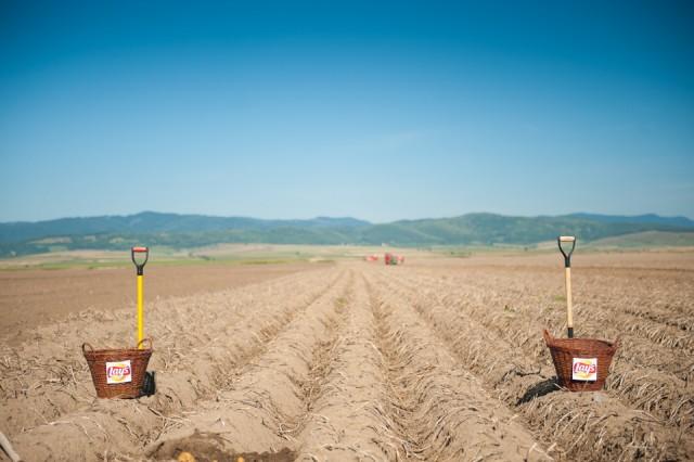 fermierii-lays-recoltarea-a-doua-zi-low-res-103_resize