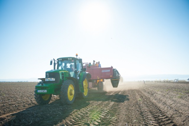 fermierii-lays-recoltarea-a-doua-zi-low-res-46_resize