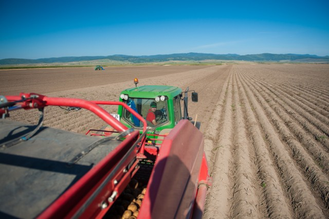 fermierii-lays-recoltarea-a-doua-zi-low-res-62_resize