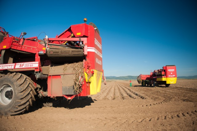 fermierii-lays-recoltarea-a-doua-zi-low-res-6_resize