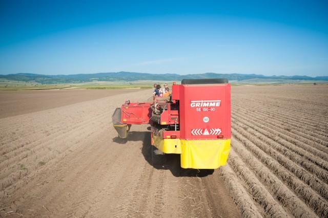 fermierii-lays-recoltarea-a-doua-zi-low-res-85_resize