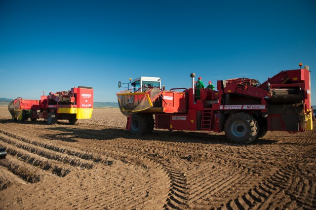 fermierii-lays-recoltarea-a-doua-zi-low-res-8_resize